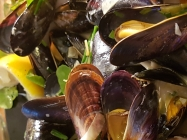 Mussels from Hastings